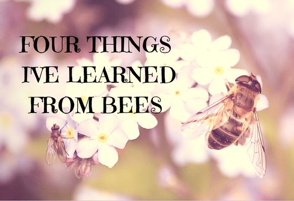Four Things I've Learned From Bees